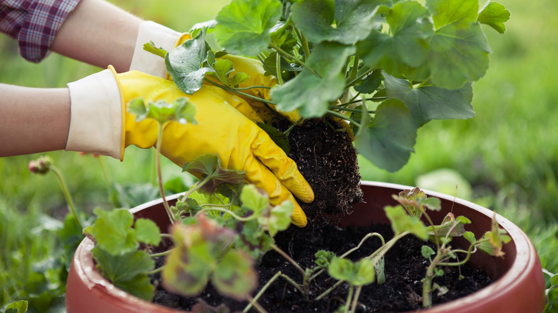 Verigrow - all-purpose fertiliser and soil improver